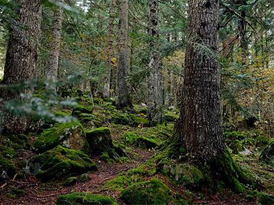caminos bosques