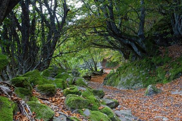 bosque de carlac