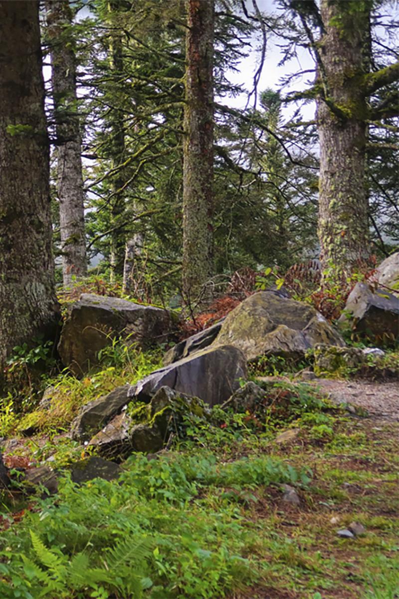 bosques de setas